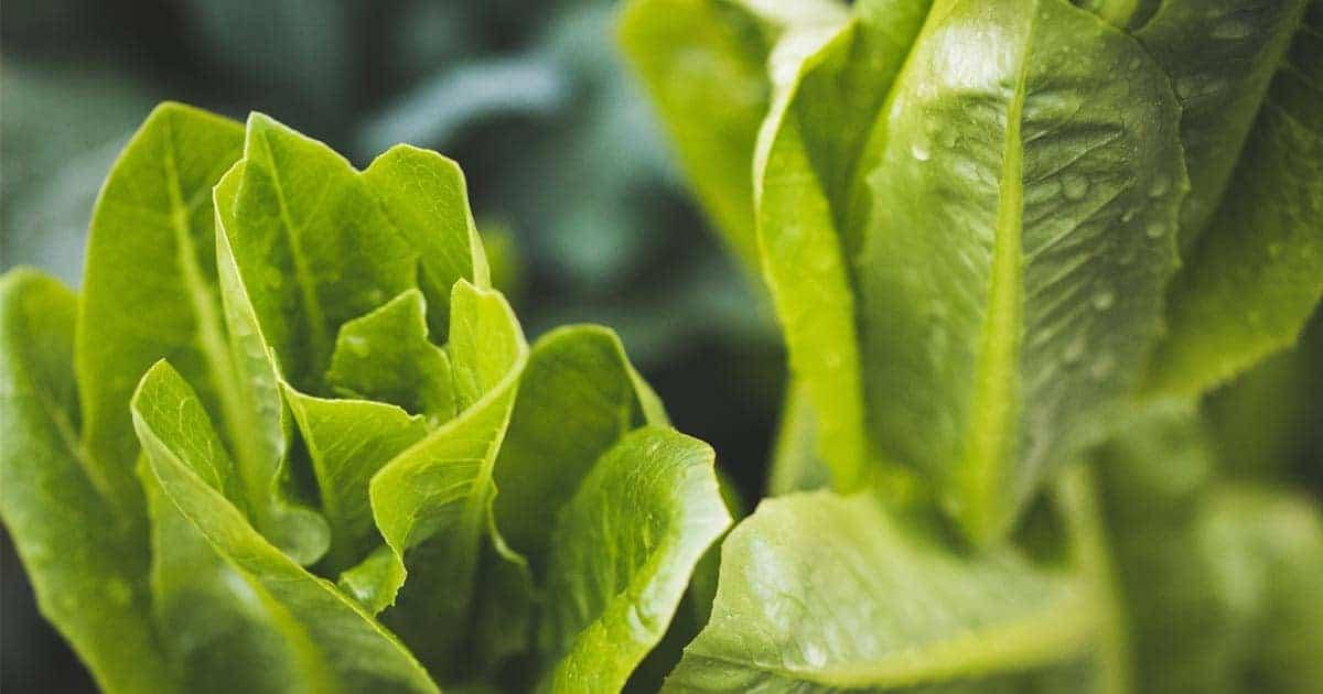 วิธีการปลูกผักไฮโดรโปนิกส์, ขั้นตอนการปลูกผักไฮโดรโปนิกส์