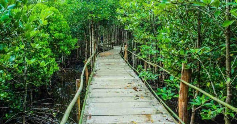 จิตอาสาปลูกป่า, กิจกรรมปลูกป่า