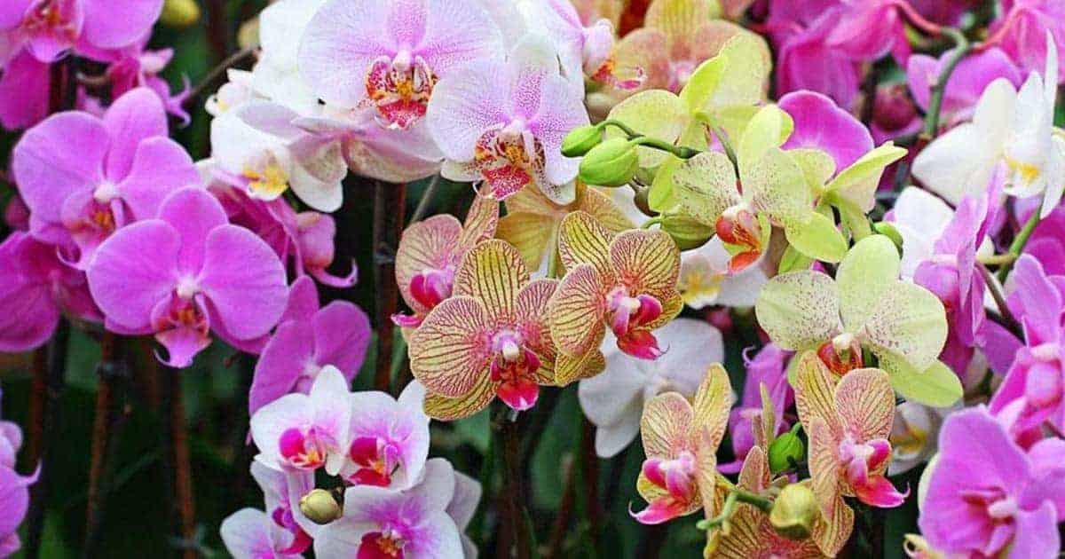 แชร์ ความหมายของดอกไม้แต่ละชนิด ที่ไม่ควรพลาดพร้อมไปกับเรียนรู้ภาษาอังกฤษ