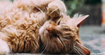 แมวอ้วนน่ารัก, แมวเหมียวน่ารัก