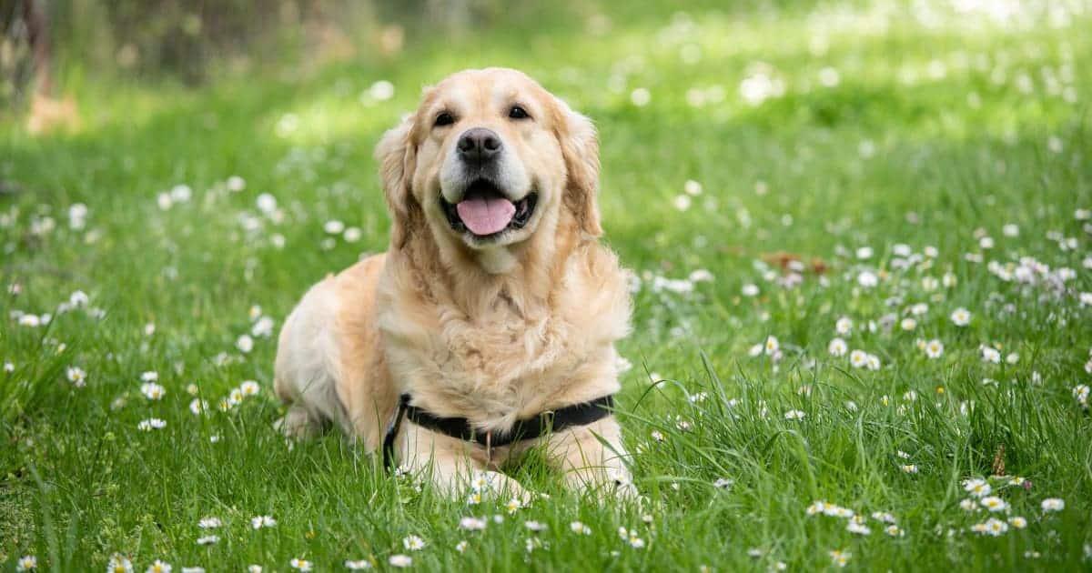 สุนัขพันธุ์อะไรเลี้ยงง่ายที่สุด, สุนัขน่าเลี้ยง