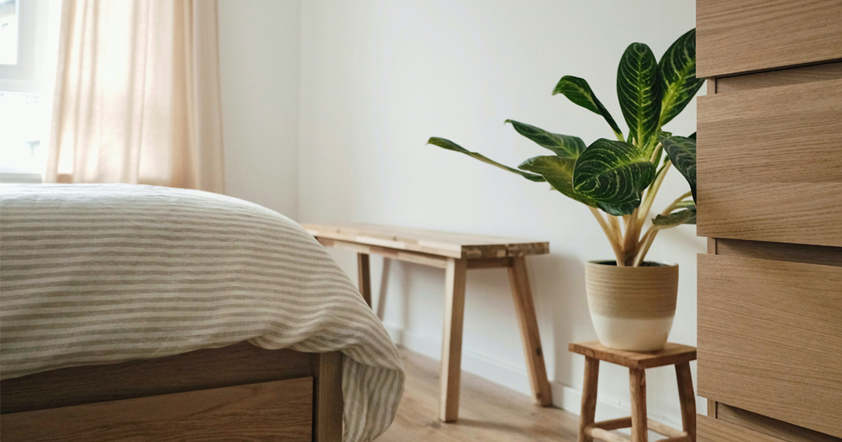 ต้นอะไรปลูกในห้องนอนได้, ต้นไม้ปลูกในห้องนอนไม่มีแดด